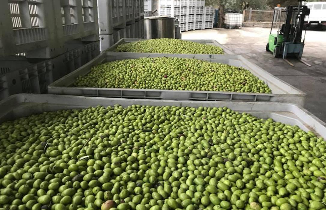 Los precios en origen del aceite de oliva siguen sin levantar cabeza ante la desesperación del sector