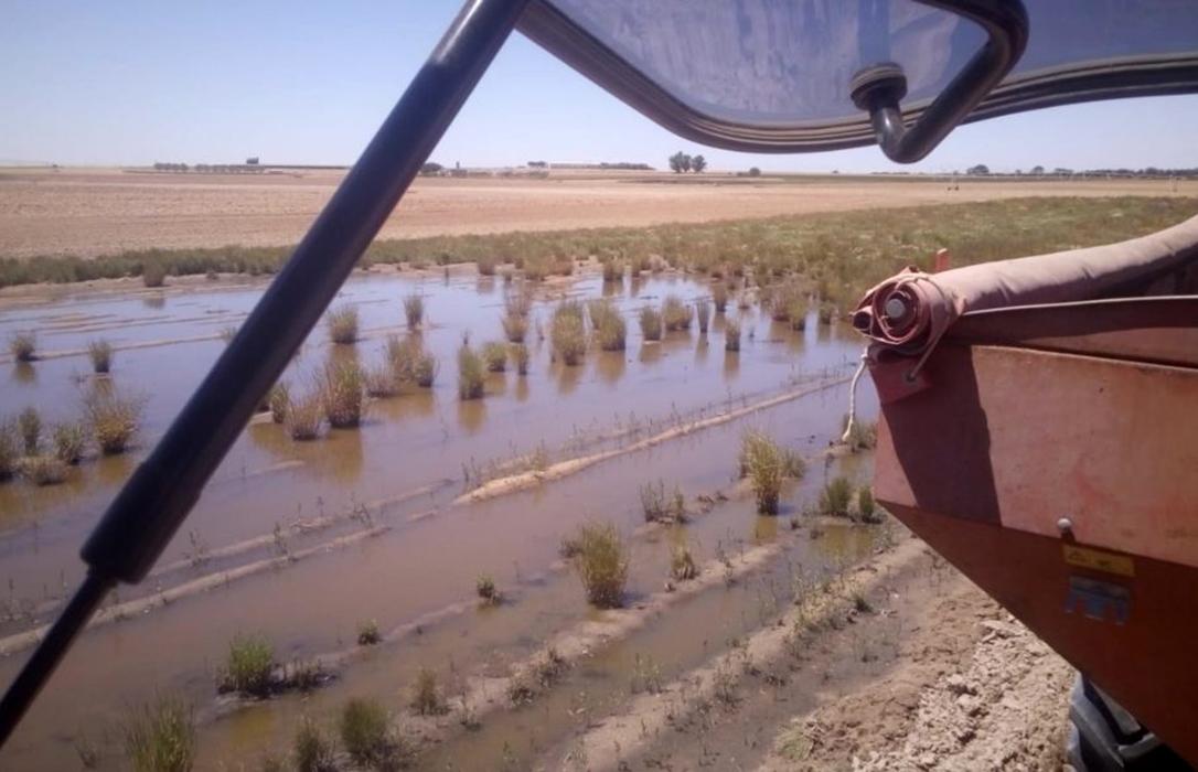 Las fuertes lluvias y la ausencia de desagües ni canalizaciones deja sin posibilidad de siembra a las patatas salmantinas
