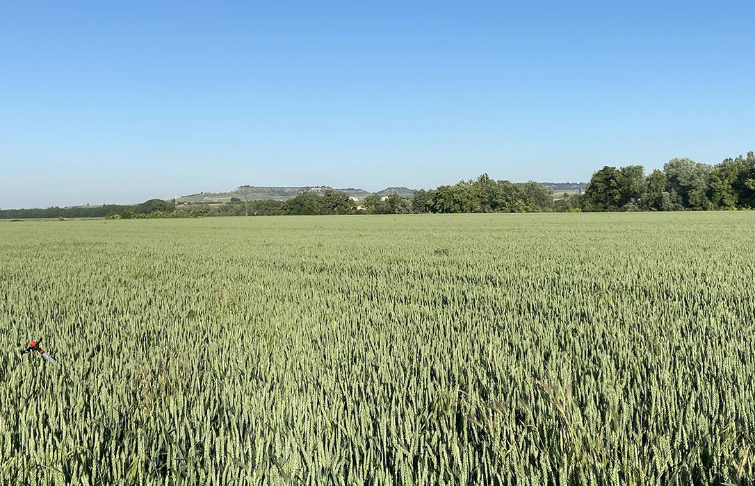 Cereales: Una cosecha que rondará el récord de rendimientos y producciones, pero marcada por el temor a los bajos precios