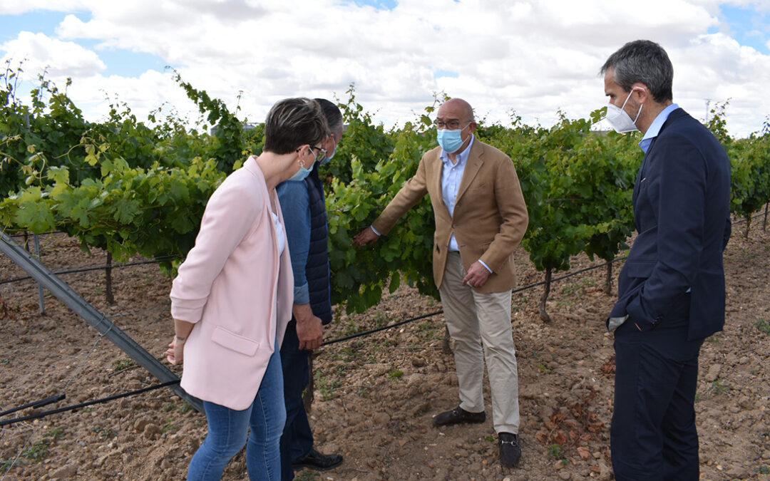 Castilla y León anima al sector a apostar por la cosecha en verde si no ven una posiblidad de colocar la uva