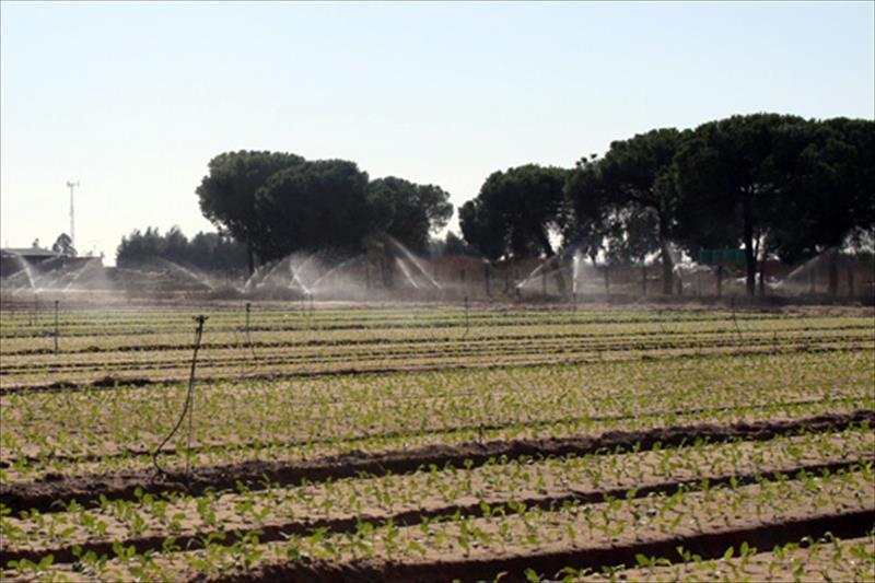 La CH Guadalquivir legalizará los derechos de agua de más de 1.600 hectáreas en la Corona Norte de Doñana