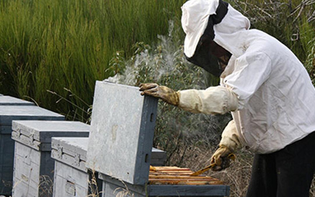 Denuncian unas exigencias a las ayudas a la apicultura profesional que buscan una regulación encubierta en CyL