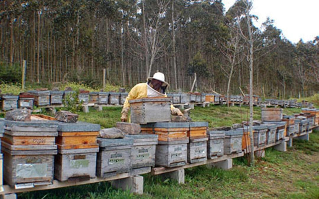 La producción de miel clara extremeña de primavera cae un 60% respecto a una campaña normal por la climatología