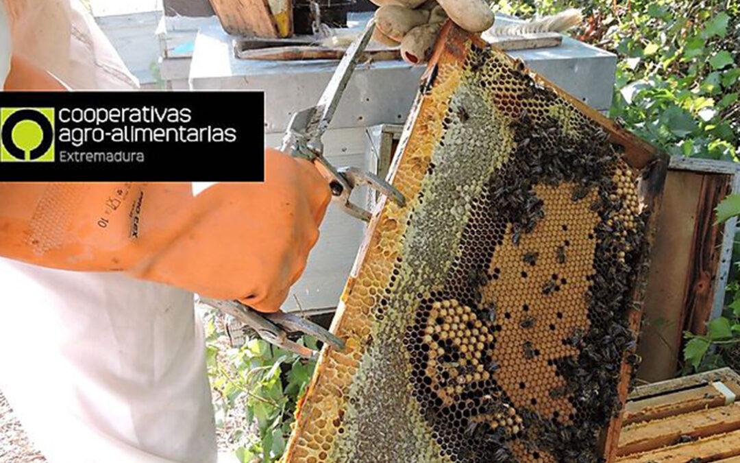 Cooperativas Extremadura lamenta que la nueva norma de etiquetado de la miel continúe sin recoger información clara del origen