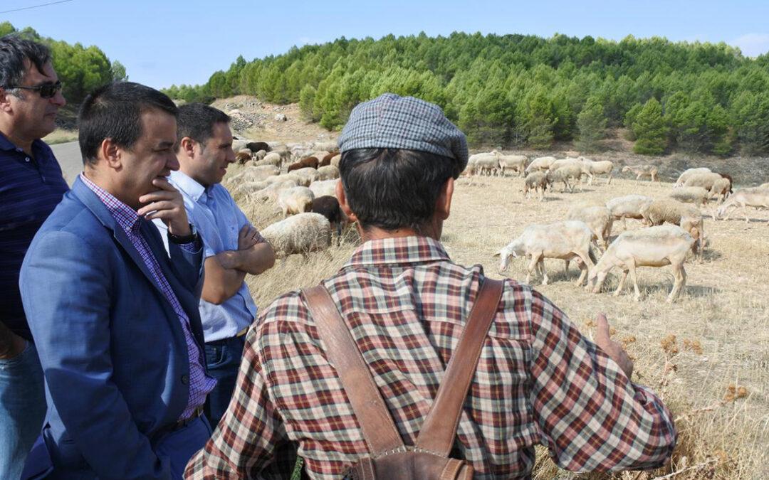 CLM abonará cerca de 5 millones de euros en ayudas a agricultores y ganaderos, entre ellas, los más de 1,8 millones al pastoreo