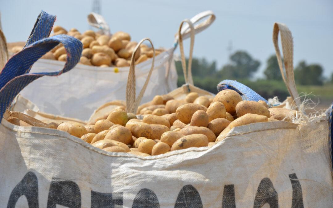 Agricultores y ganaderos de Sevilla donan 12.000 kilos de patatas y 1.000 kilos de carne de cordero  al banco de alimentos