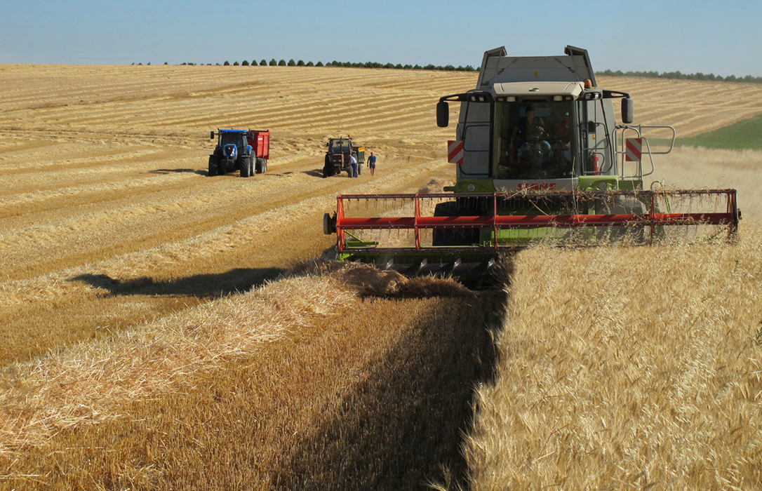 Nuevo mensaje al sector: Hay que ser prudentes y 'franceses' y partir de un precio de 185 euros la tonelada de trigo