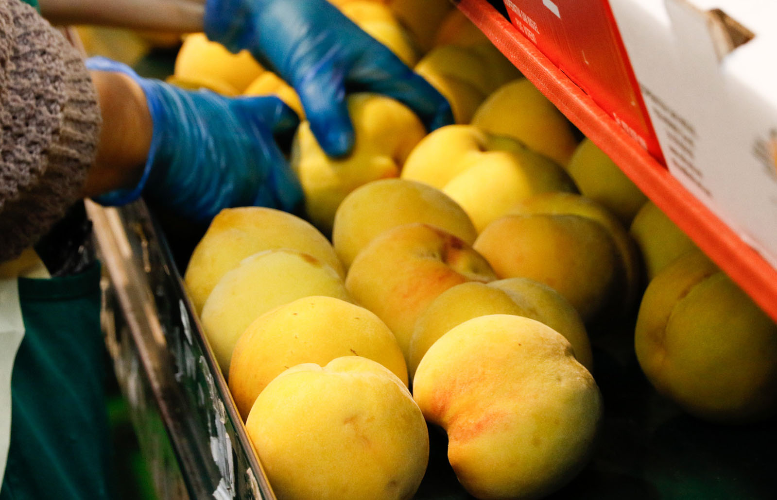 Nuevas denuncias provocan la apertura de expedientes sancionadores a 3 empresas murcianas de la fruta