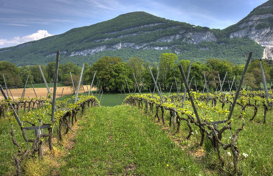 El Ministerio de Agricultura distribuye las autorizaciones para las nuevas plantaciones de viñedo en 2020 para 4.750 nuevas hectáreas