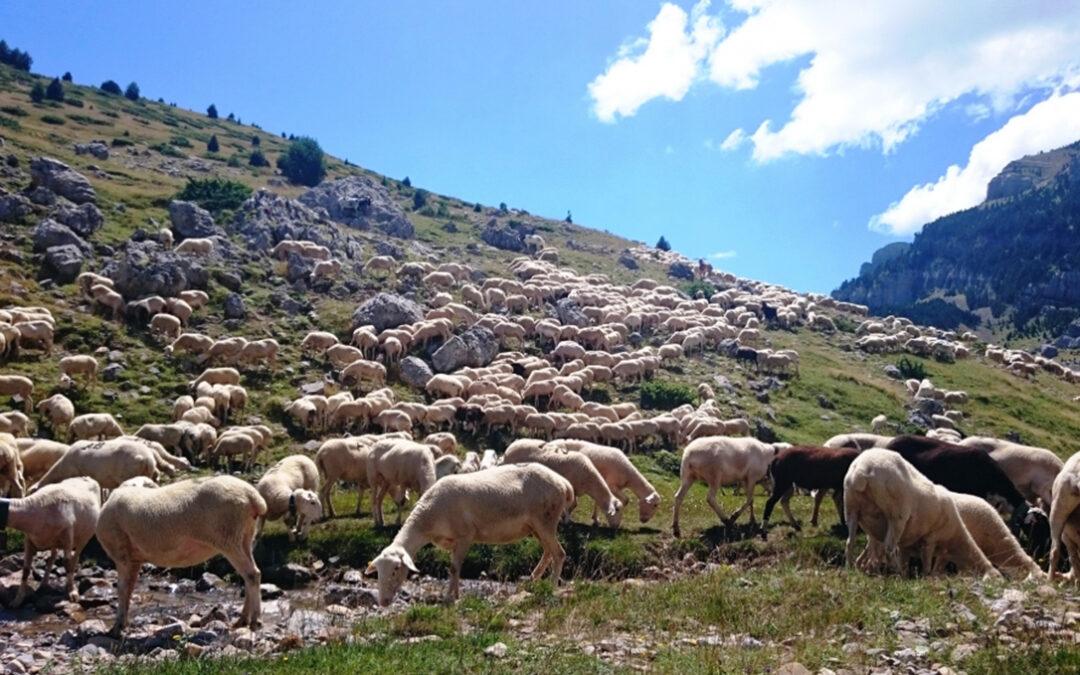 Ayudas de 500.000 euros para ganaderos de zonas con presencia del oso y el lobo hayan sido o no atacados por ellos