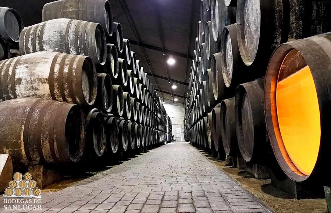 Nace Bodegas de Sanlúcar, una realidad de la unión de la manzanilla para defender sus derechos y promocionar sus vinos