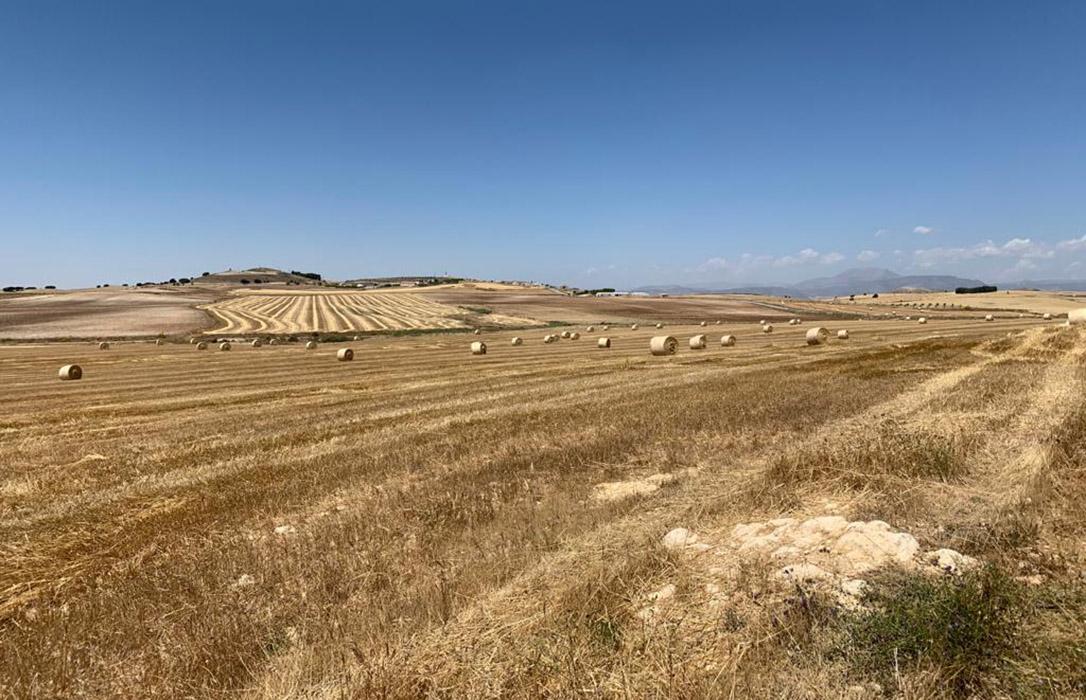 Nueva acusación a los especuladores por provocar caídas de los precios de los cereales antes de comenzar la cosecha
