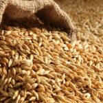 Una semana después de arrancar, la cebada se queda sin cotizar en la Lonja de León por las discrepancias en los precios