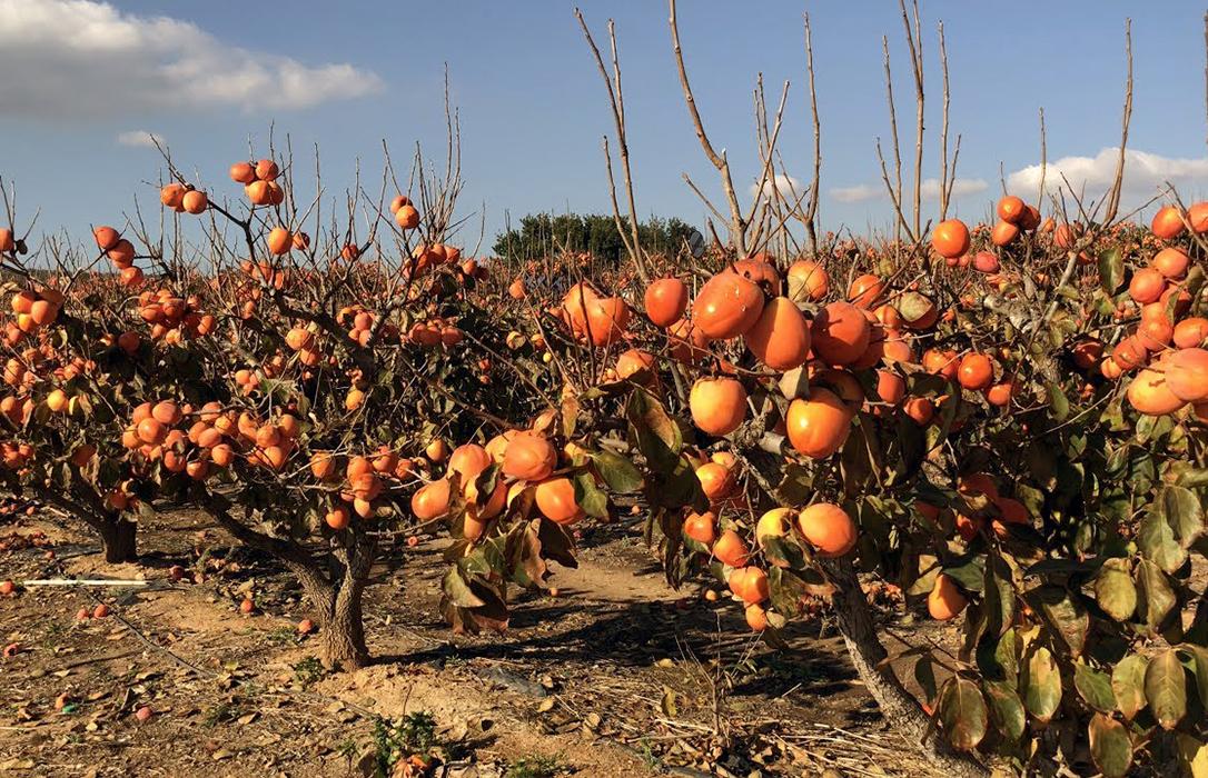 Proponen que si hay un rebrote de covid lo asuma el agricultor: La industria pone cláusulas de cambiar los precios si bajan las ventas