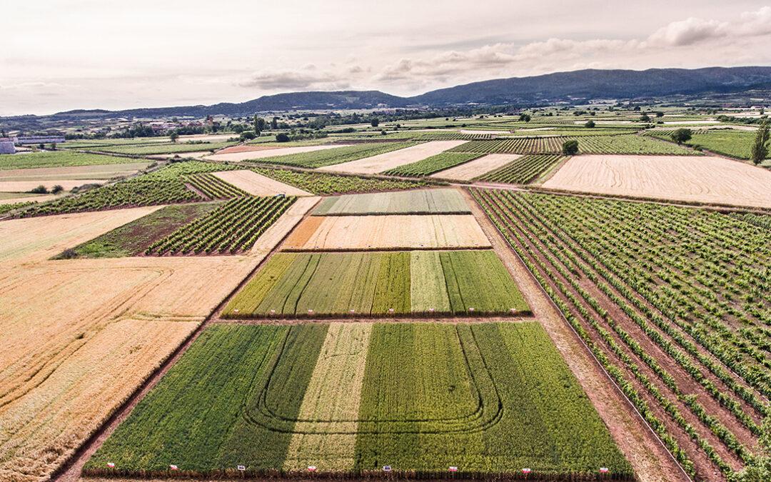 Un proyecto estudia nuevas técnicas para mejorar la producción y el comportamiento agronómico de la remolacha