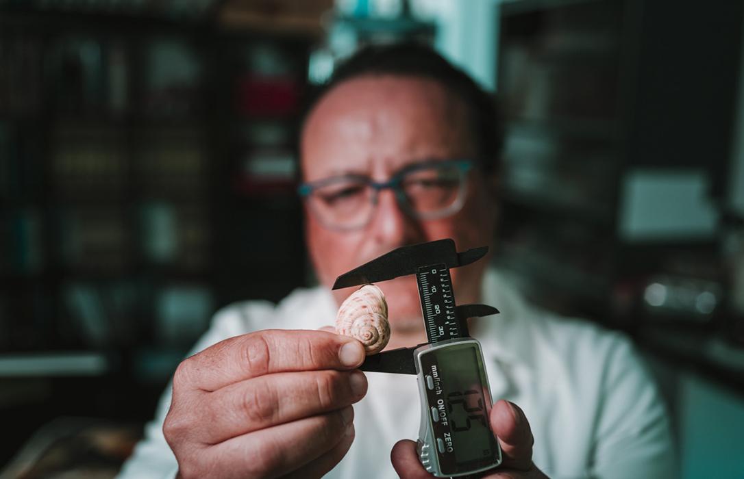 Crean una innovadora técnica de cría de caracoles terrestres a escala industrial para impulsar el desarrollo del mundo rural