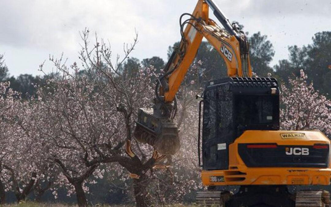Máxima precaución: Detectada una partida de material vegetal procedente de EEUU infectada de Xylella en Castellón