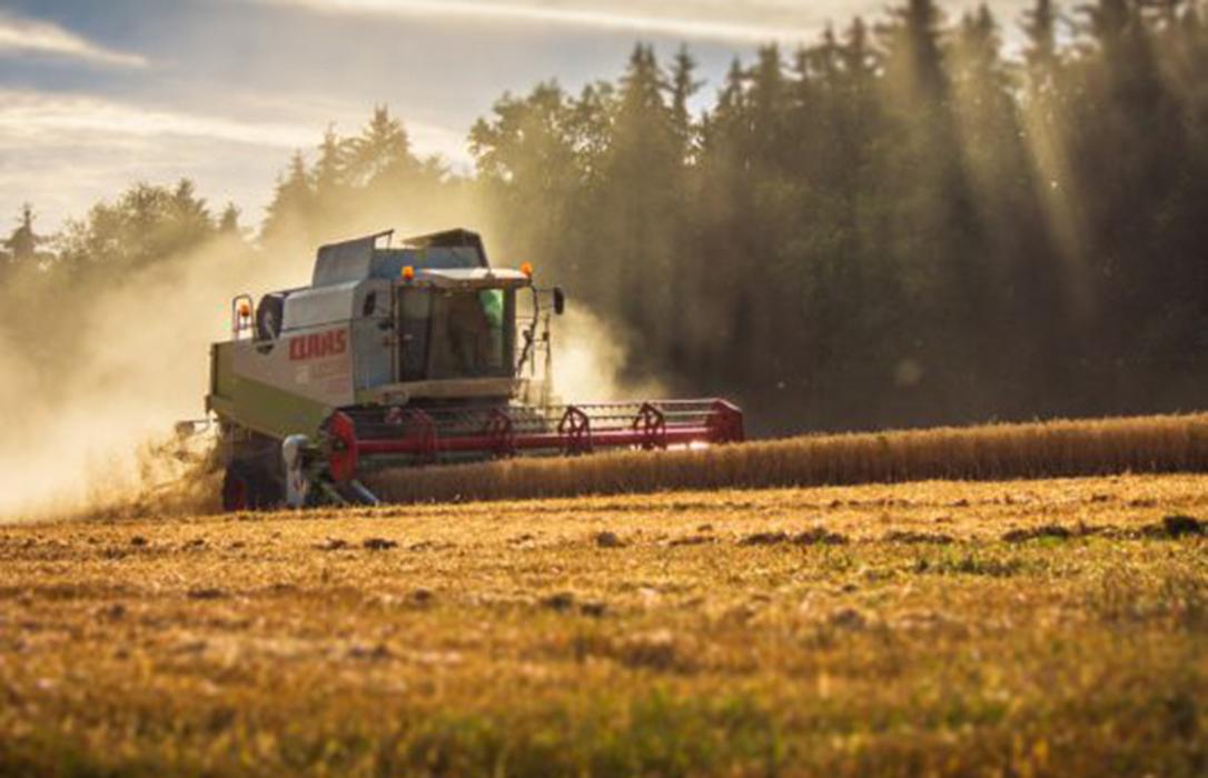 Ejemplo en León de los datos del cereal: Un 4,68% más en superficie, un 52,8% más en producción y un 16% menos en precio por kilo