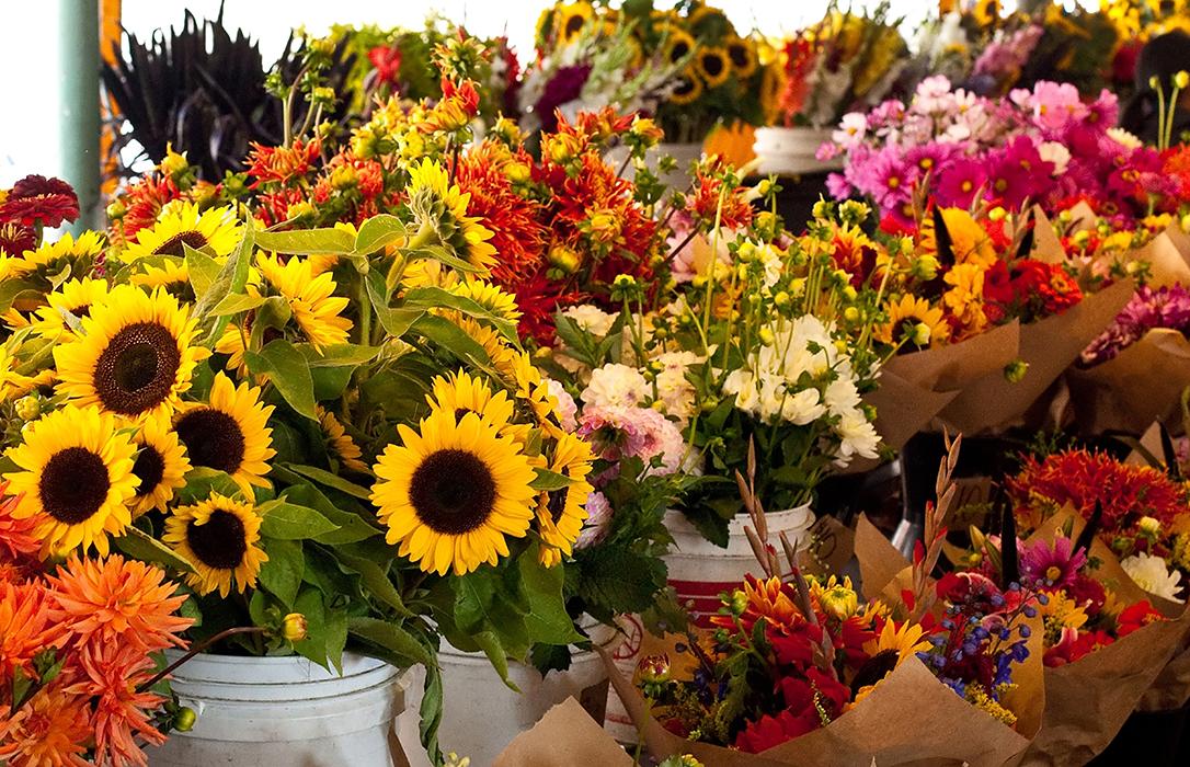 Reclaman ampliar el importe y el plazo establecidos para las ayudas al sector de flor y planta