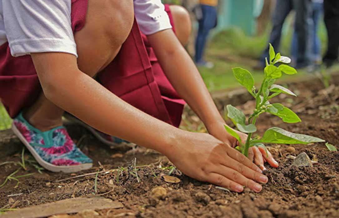 Proponen que, por cada niño o niña que nazca en Andalucía, se plante un árbol en su municipio