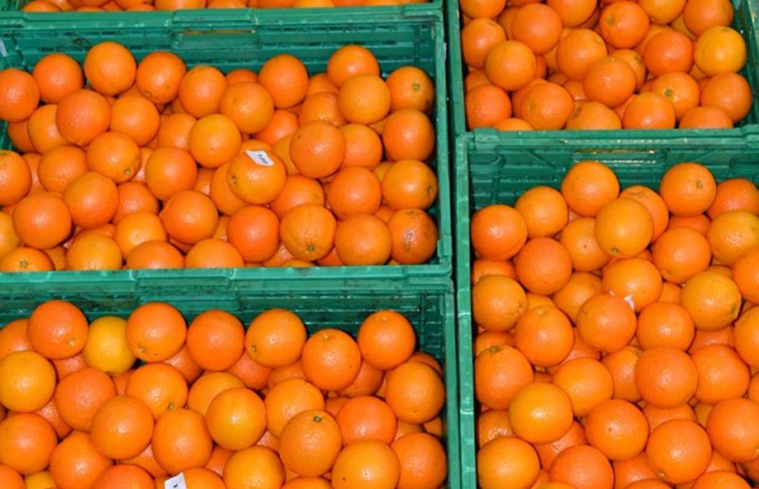 Alertan de la llegada de un barco con 2.500 toneladas de naranjas argentinas en plena polémica por la presencia de plagas