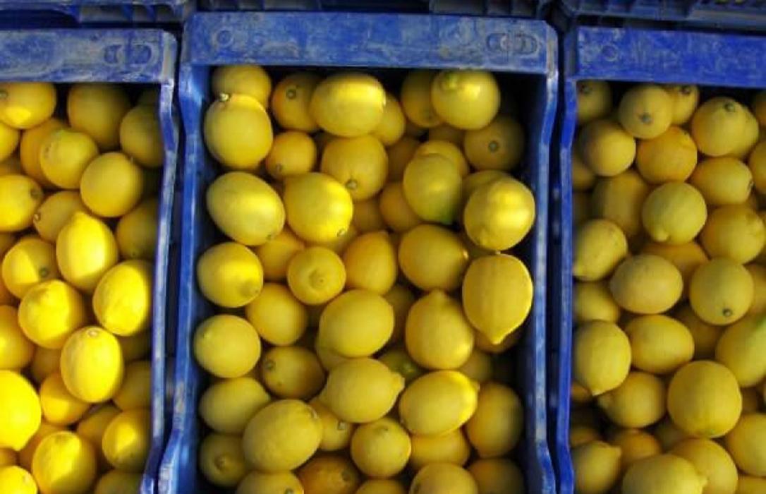 Alertan de 30 interceptaciones de Mancha Negra y dos de Cancrosis detectadas en puertos de la UE en limones procedentes de Argentina