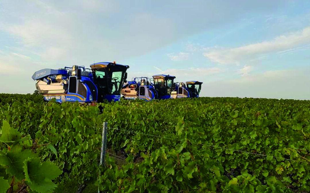 New Holland introduce una nueva malla despalilladora para sus vendimiadoras Braud