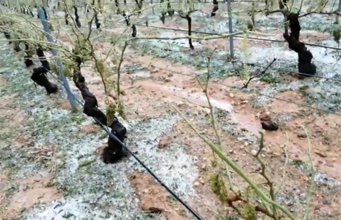 La peor tormenta de pedrisco de los últimos 30 años en Utiel-Requena afecta a 30.000 hectáreas con unas pérdidas de 30 millones