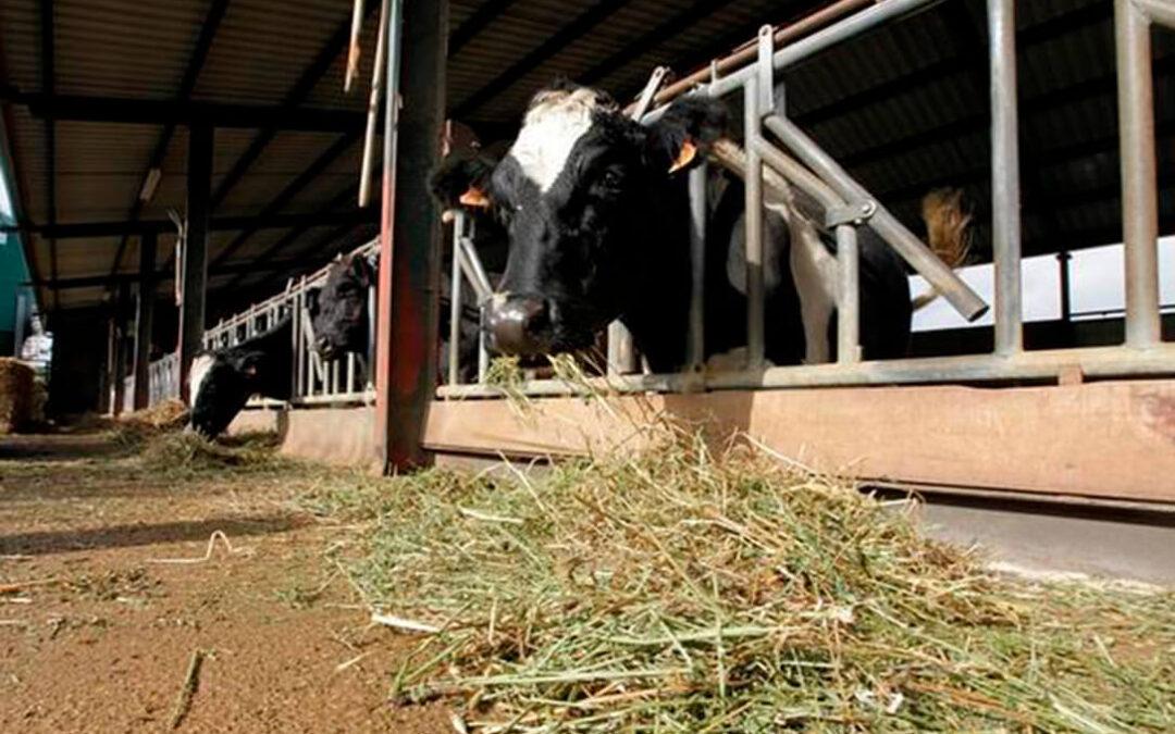 Nueva denuncia por la fuerte presión de la industria para que los ganaderos lácteos firmen contratos a la baja