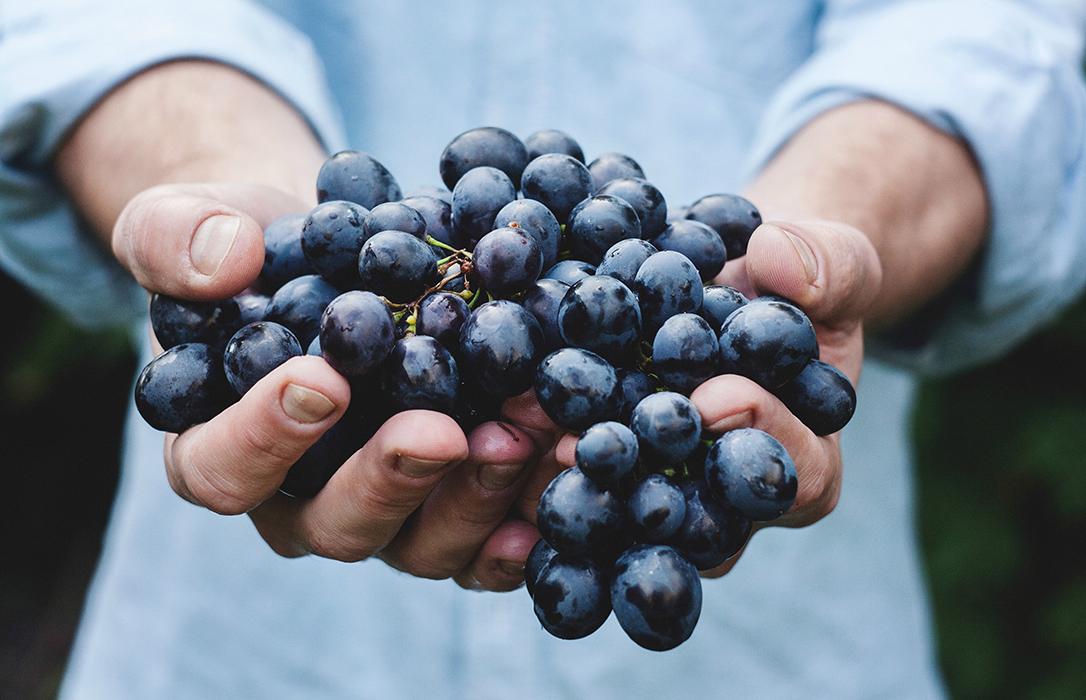Identifican los compuestos del vino responsables de sus propiedades saludables