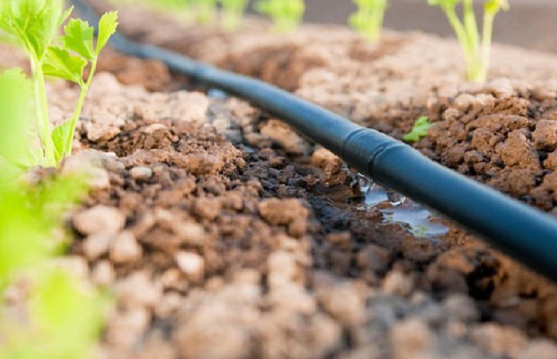 Solo podrá haber agricultura ecológica a entre 0,5 y 1,5 kilómetros del Mar Menor con riego por goteo y sin más invernaderos