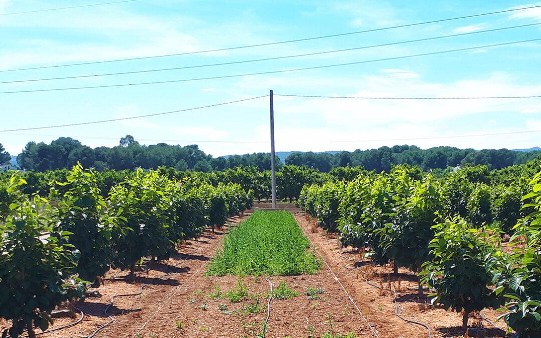 Seipasa y la Universitat Politècnica de València trabajan en el desarrollo de un nuevo herbicida natural