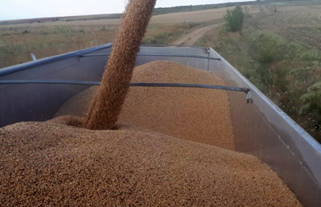 Las subidas internacionales se trasladan a los precios de los cereales españoles, que viven una semana de aumento generalizado