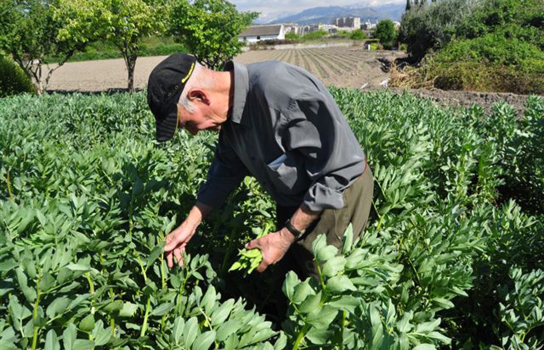 La superficie ecológica crece un 4,9% en 2019, menos del 10% de la superficie agraria útil y lejos del 25% que quiere imponer la UE