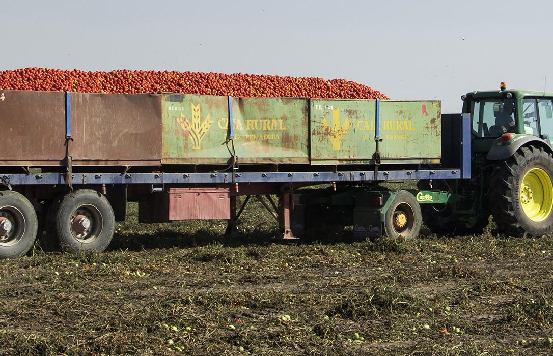 """Piden la colaboración de todos para un transporte de tomate """"seguro"""" en esta campaña"""