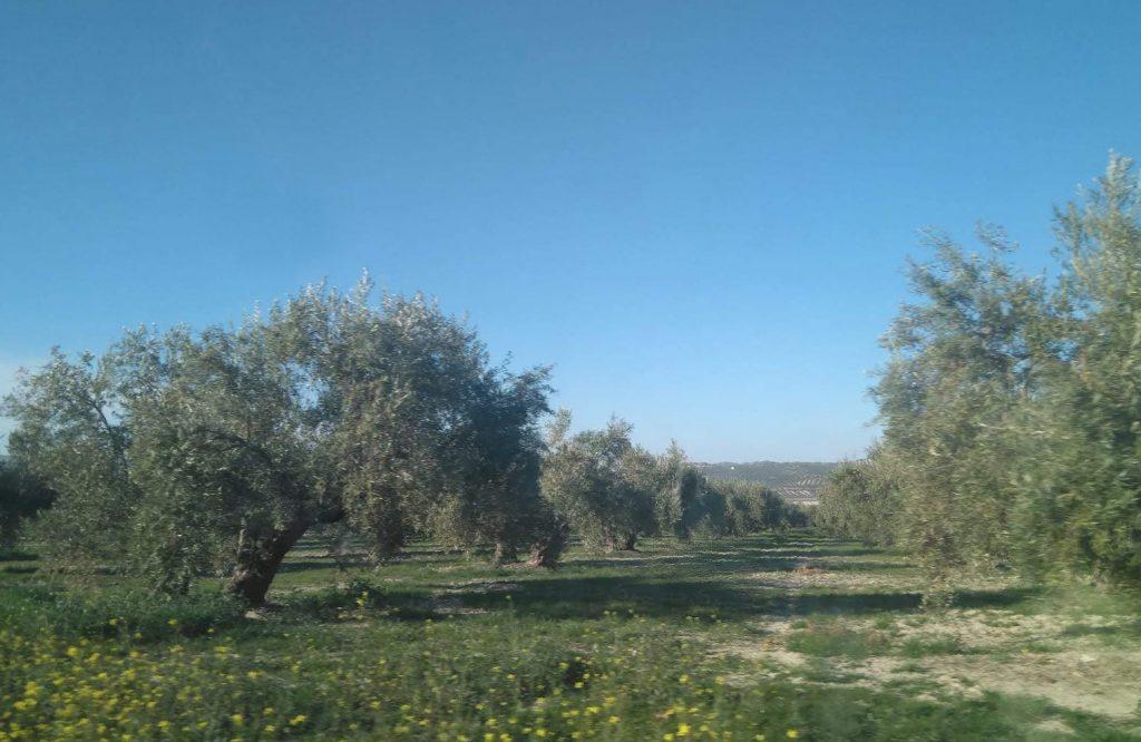 Planas baraja adoptar medidas obligatorias con el almacenamiento de algunas categorías de aceite de oliva