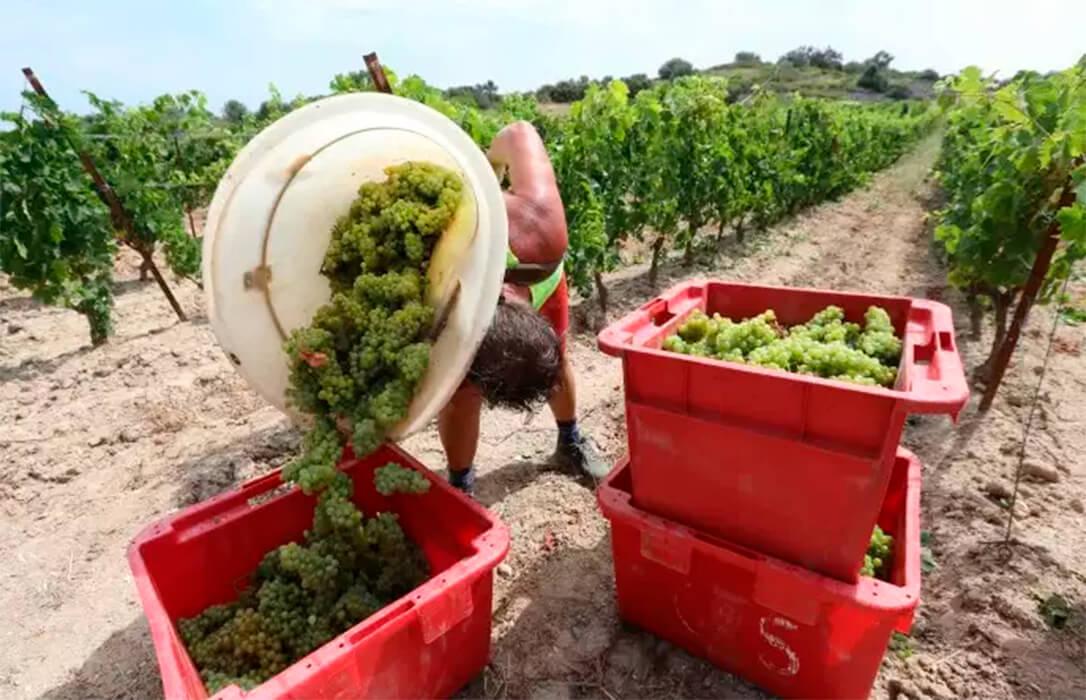 Viticultores y fruticultores recibirán por vez primera ayudas directas de la PAC si prospera la propuesta del Ministerio