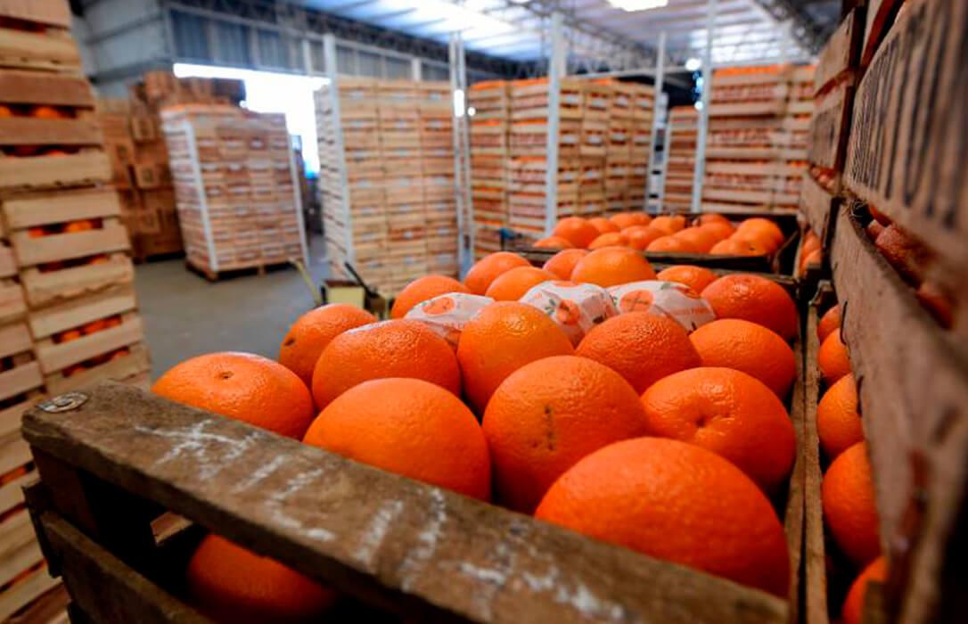 Tarde y mal: La UE prohíbe temporalmente la importación de cítricos de Argentina para evitar la llegada de plagas