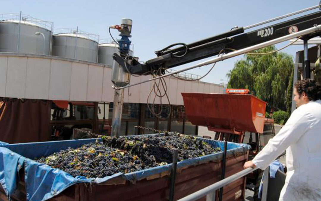 El sector vitivinícola cuenta para esta nueva campaña con los contratos homologados de compra/venta de uva y vino