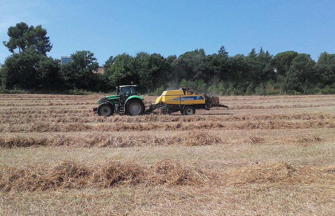Las lluvias y los drásticos cambios de temperatura han provocado un descenso del 25% en la cosecha de cereales de Cataluña