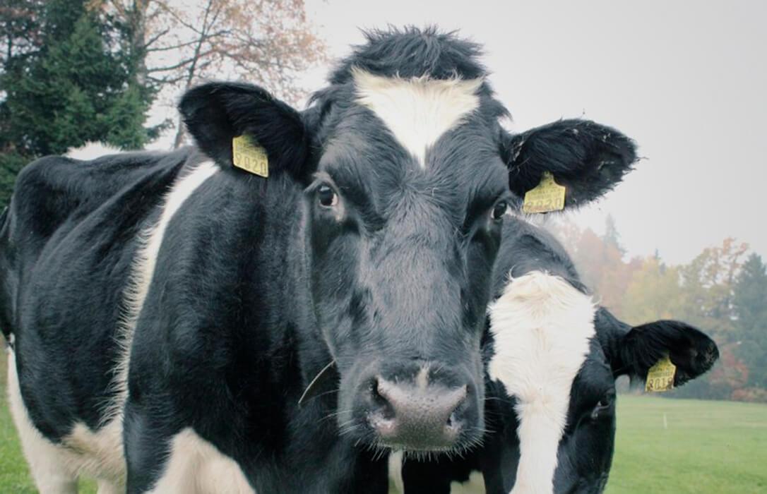 La amenaza de demandas millonarias hace temblar los cimientos de la industria láctea, que reconoce que está preocupada
