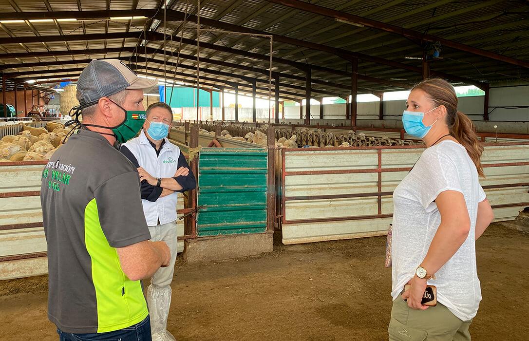 La Junta aboga por «desestacionalizar» la producción de ovino en Castilla y León para mejorar su competitividad