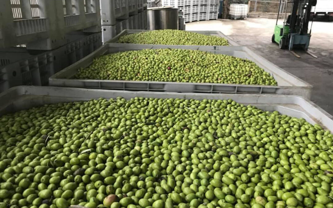 España se libra a medias: EEUU mantiene los aranceles pero no los subirá al 100% a los productos agroalimentarios españoles