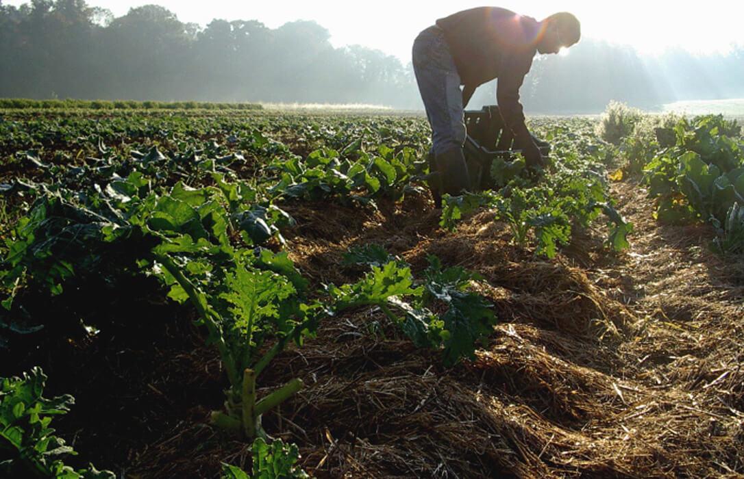 Hasta EEUU critica la estrategia 'De la Granja a la Mesa' porque se olvida de los agricultores y su competitividad