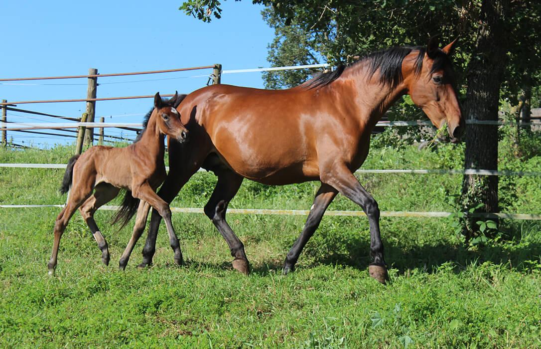Detectados dos casos de fiebre del Nilo Occidental en sendos caballos de Huelva y Cádiz