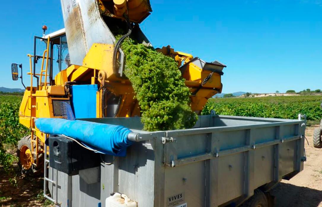 La Interprofesional del Vino advierte del riesgo de colapso si no se toman nuevas medidas antes del arranque de la vendimia