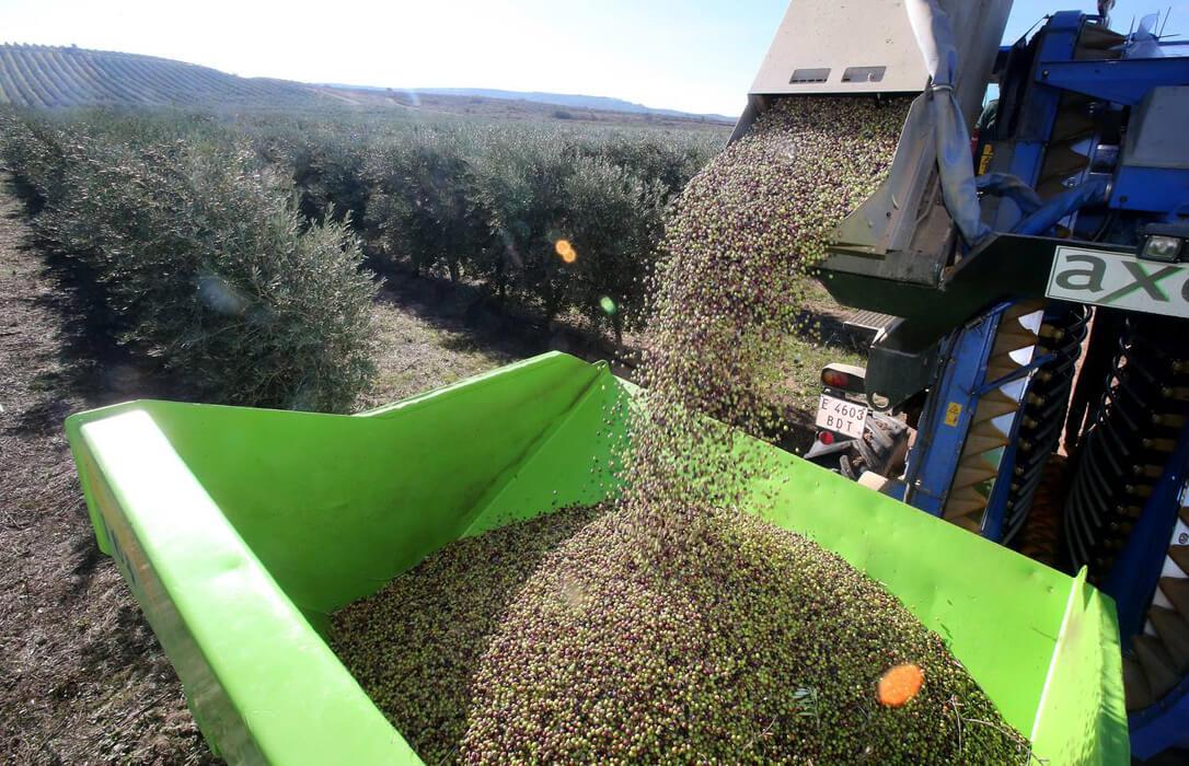 Rechazo a la prohibición durante un año a la recogida nocturna de aceituna con cosechadora en superintensivo