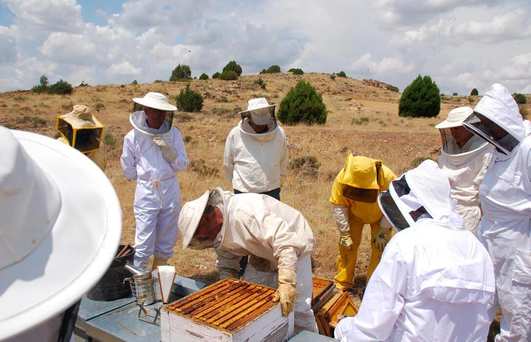 La baja producción de miel y la varroa ponen en jaque a la apicultura en uno de los peores años de la década