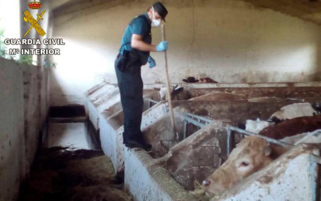 El Gobierno baraja hasta tres años de cárcel por muerte de un animal por maltrato y la tauromaquia se libra… de momento