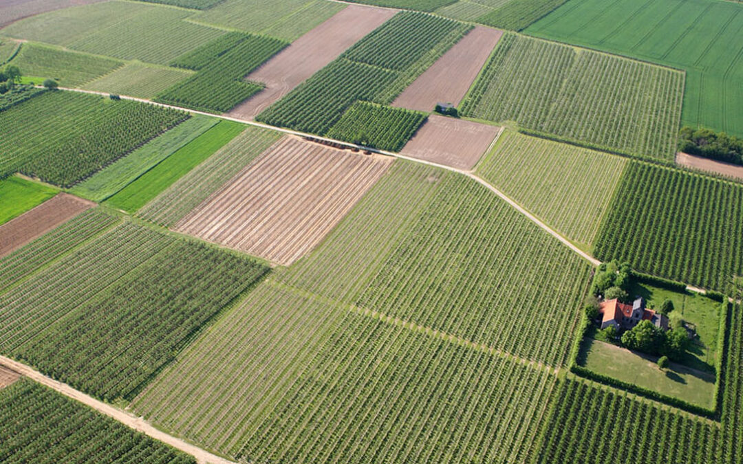 La aplicación del Pago Verde ha propiciado la diversificación de cultivos, el mantenimiento de pastos permanentes y el barbecho